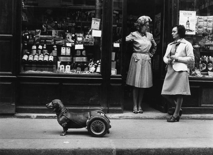 Robert Doisneau poto de rue humoristique d'un petit chien avec des roues soutenant ses pattes arrière, à côté de deux femmes discutant à l'extérieur d'une devanture de magasin - photographes célèbres