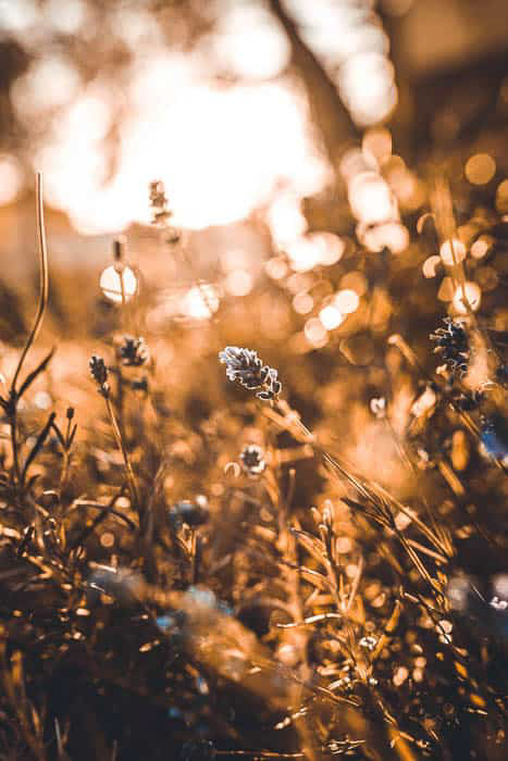 Dreamy close up of meadow flowers - photography basics