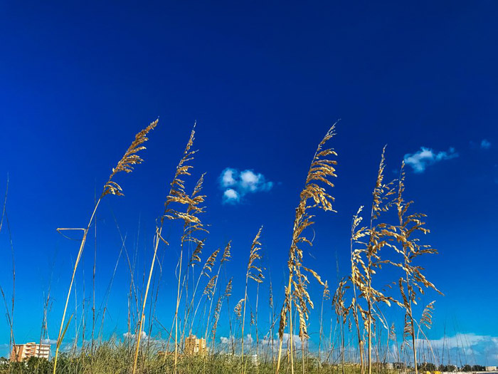 A close up of grass and plants under clear blue skies shot using HDR camera settings on iPhone