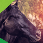 15 Best Tips For Taking Beautiful Horse Photography