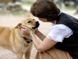 123553318-talk-to-your-dog-632x475