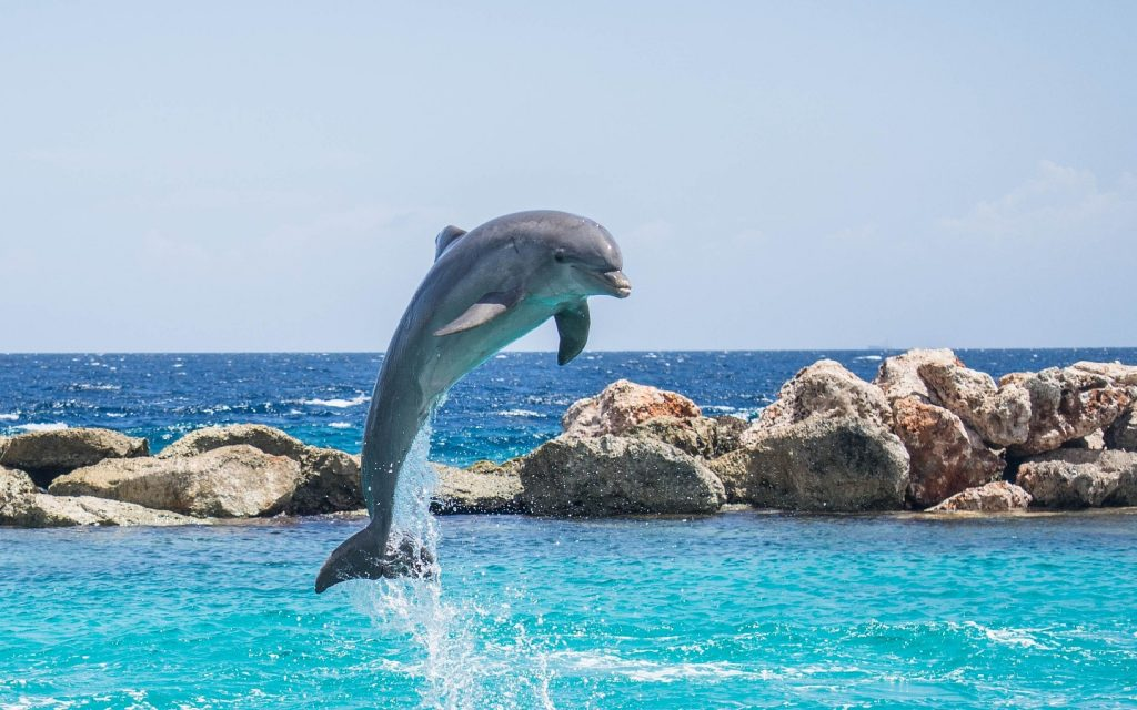 Dolphin Spirit Animal Signs