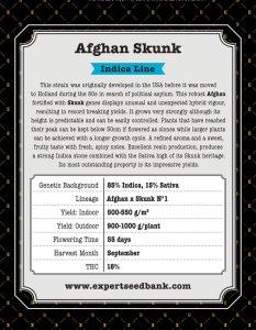 Afghan Skunk