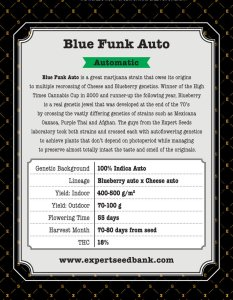 Blue Cheese Auto