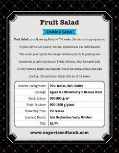 Fruit Salad Bulk