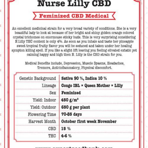 Nurse Lilly CBD
