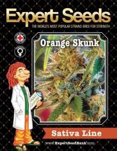Orange Skunk