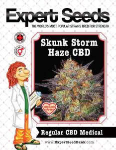 Skunk Storm Haze CBD Regular