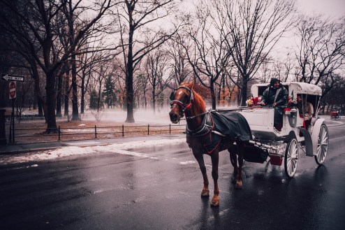 new-york-central-park-horse-carriage
