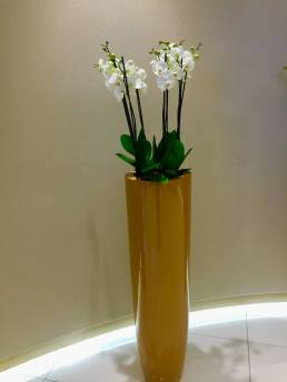 Etihad-business-class-lounge-Abu-Dhabi-entrance2