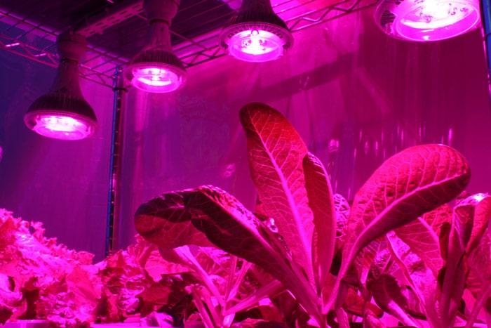 подсветка светодиодными лампами