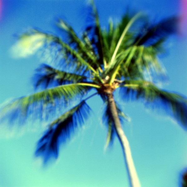 Palm, North Shore, O'ahu. fBHF on expired Ektachrome.