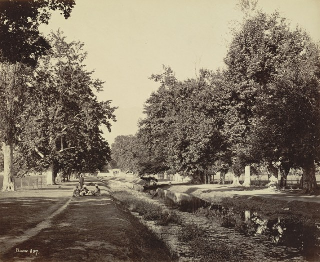 Shalimar Bagh Canal around 1864, looking towards the entrance terrace of Shalimar Bagh. With avenues of Chinar trees, soft green edges (Photo: Samuel Bourne, c.1864).