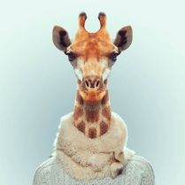 Zoo-Portraits-Yago-Partal-explicark09