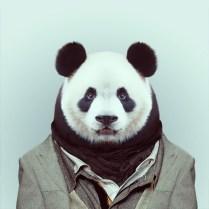 Zoo-Portraits-Yago-Partal-explicark12