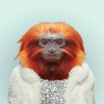 Zoo-Portraits-Yago-Partal-explicark27