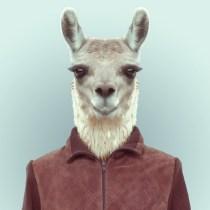 Zoo-Portraits-Yago-Partal-explicark34