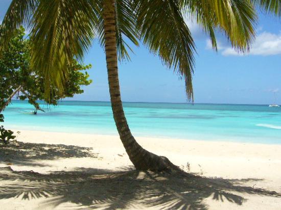 Saona Island Private Boat Tour from Punta Cana - Explora Ecotour