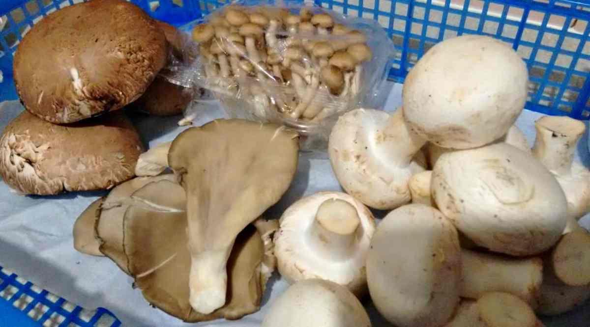 Cogumelos portobello, pleurotus, shimeji e paris