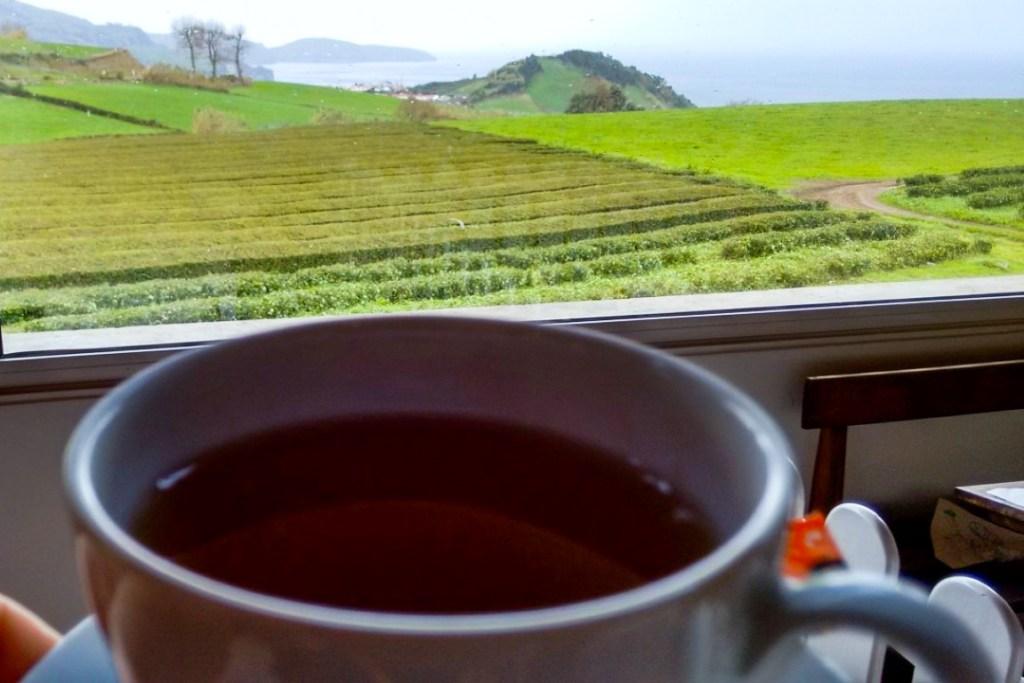 Fábrica de Chá da Gorreana, na ilha de S. Miguel. Gastronomia Açores