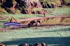 cabarceno explorando rincones (3)