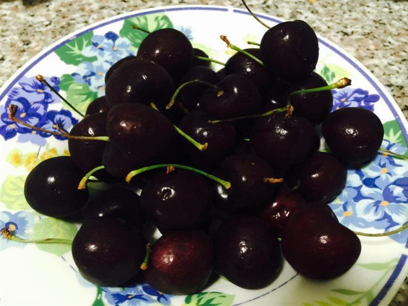 northwest cherry  yang berkhasiat