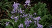 bnb-rotorua-flower-blue