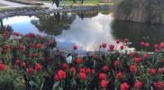 government-garden-tulip-pond