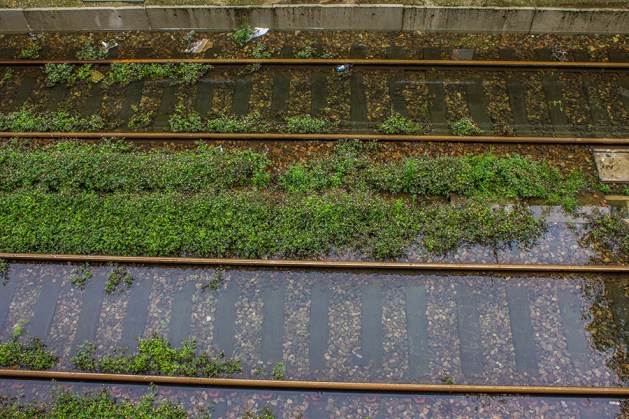 The RER C train tracks have turned into a flowery water garden.