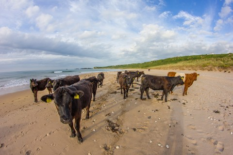 White Park Bay, Northern Ireland – A Wild Beach With An Unexpected Encounter
