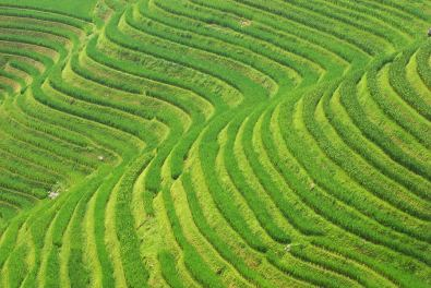 Longsheng Rice Terraces, China. The wavy curves of the terraces are so pretty and delicate that it's worth making them the subject of your picture.