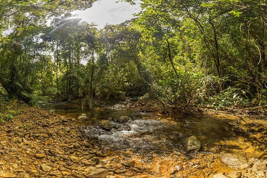 Koh Chang Jungle Trekking