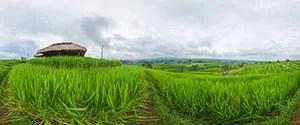 Bali - Jatiluwih