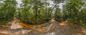 Kaieteur Falls, Trail to Menzies Landing