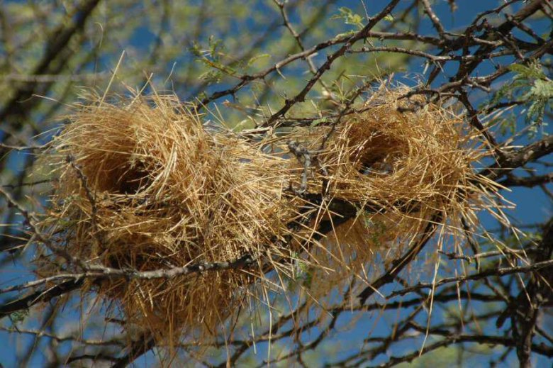 explorationvacation - 09-12_03-26-41 nests2.0