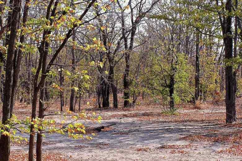 Botswana - ExplorationVacation - P1010135 mopane forest
