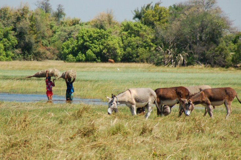 Botswana Okavango - ExplorationVacation - 09-17 donkeys and villagers