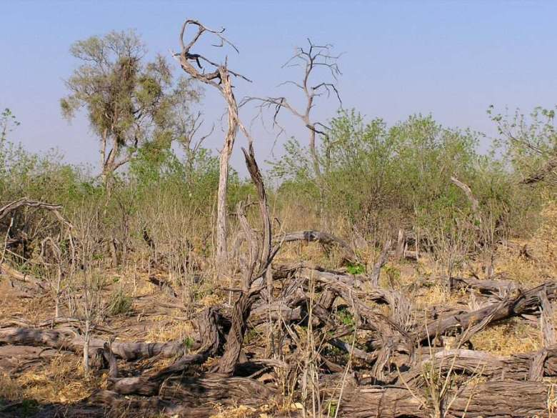 Moremi Botswana - ExplorationVacation - P1010098 dead wood