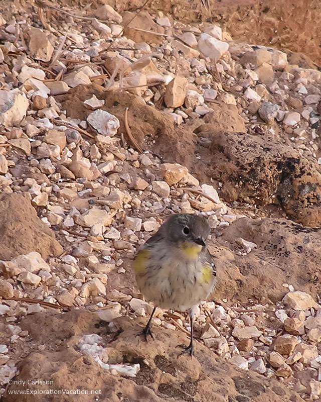 Imperial-point-sunrise-bird-ExplorationVacation
