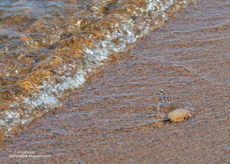 11-leech lake 32 DSC_5259 whipholt beach in Minnesota