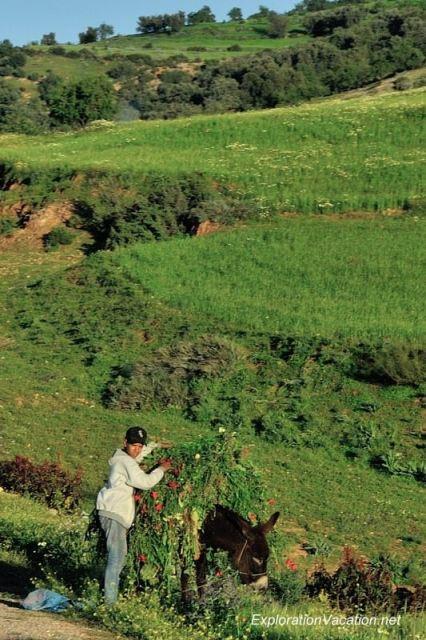 DSC_6302 rural landscape east of Marrakech 13