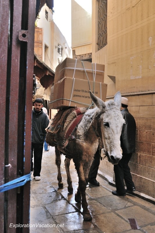 Donkey traffic in Fes DSC_1790