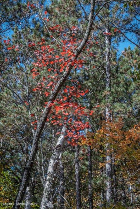 Banning State Park Minnesota - ExplorationVacation 70 DSC_6665