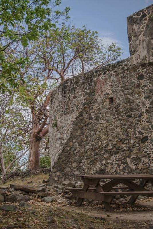 fern in Annaberg sugar mill ruins St John