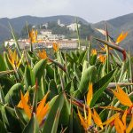 bird of paradise and buildings