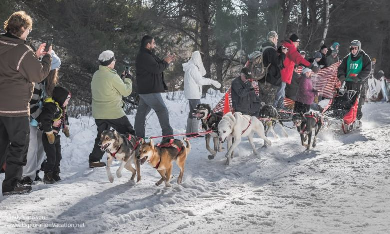 dogs at the start of the race