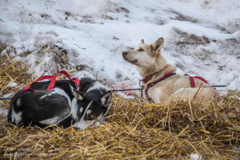 dogs at rest