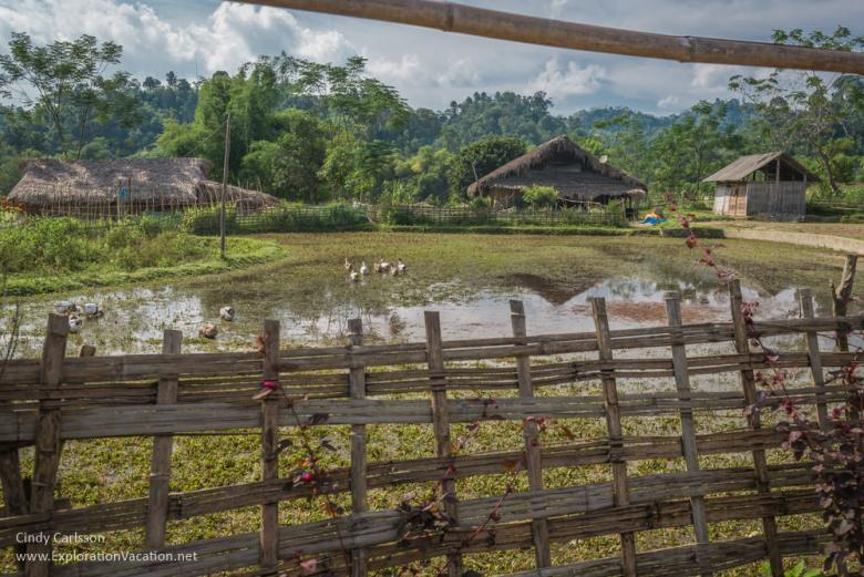 rice fields and thatched houses