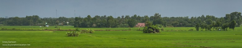 Rice fields Vietnam Mekong Delta - ExplorationVacation.net