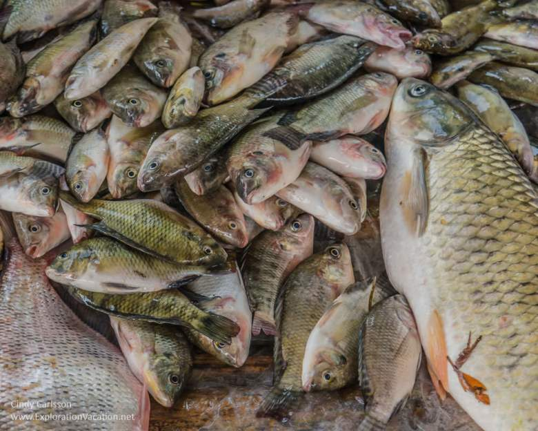 fish for sale at a market in northern Vietnam - Exploration Vacation